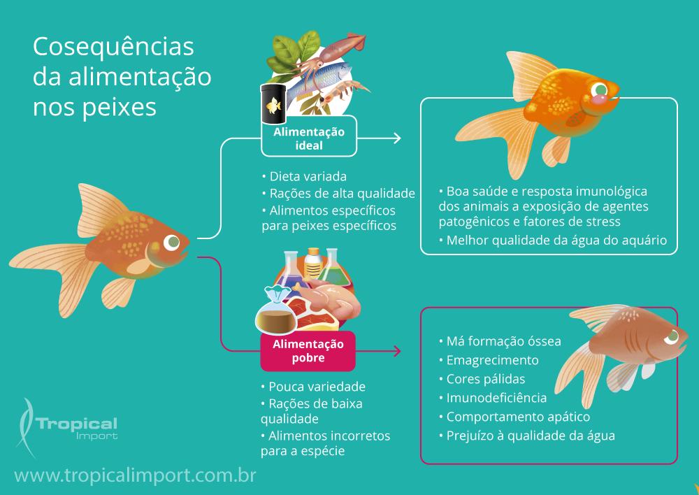 Erros e acertos na alimentação dos peixes ornamentais