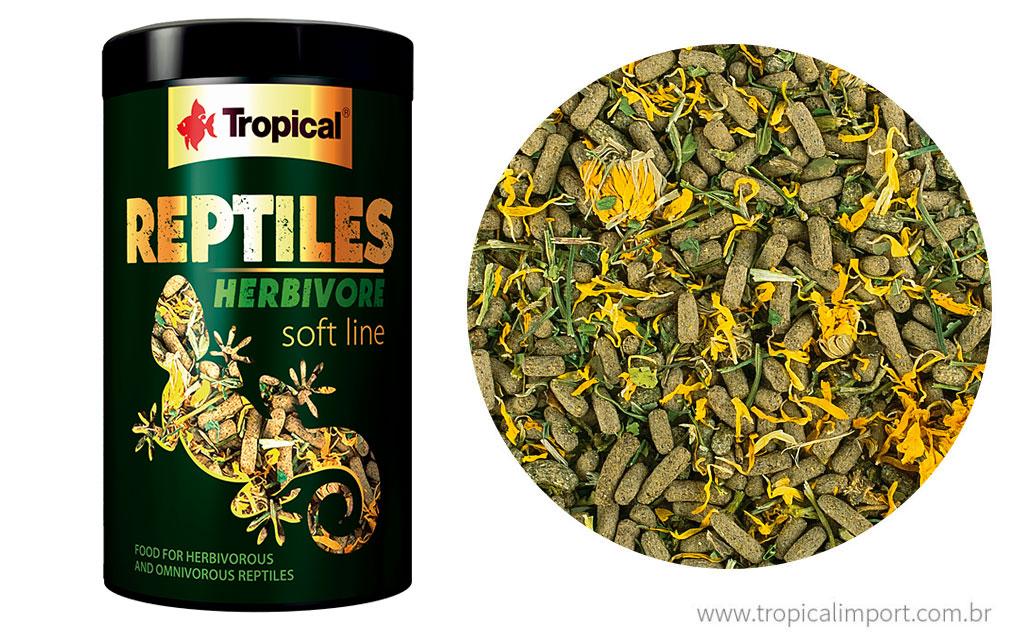 Reptiles herbivore