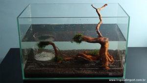Enchendo o aquário