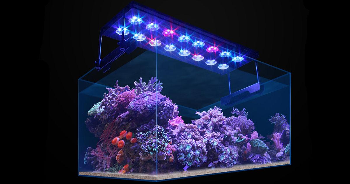 Luminária Aqua Sunrise no aquário marinho